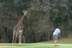golf-skukuza